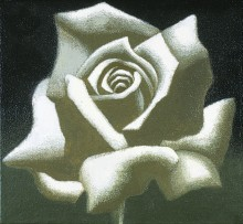 Robert Pope, White Rose