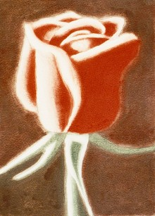 Robert Pope, Red Rose on Stem